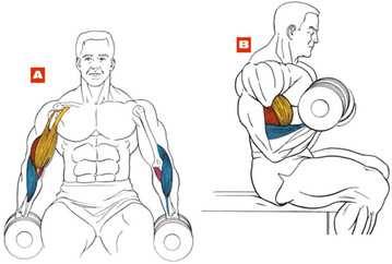 бицепс сидя_biceps sidya