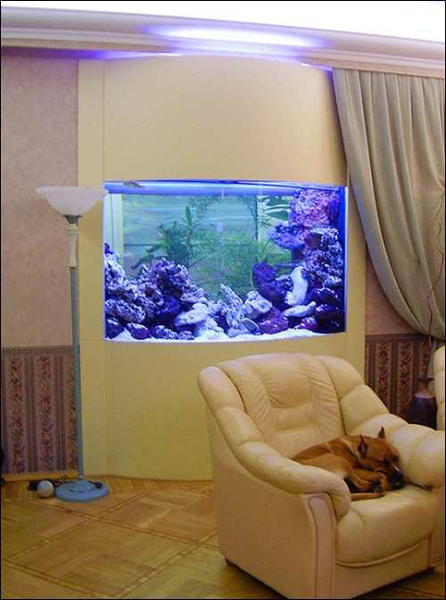 настенный аквариум_nastennyj akvarium