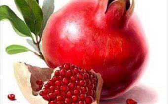плод граната_plod granata