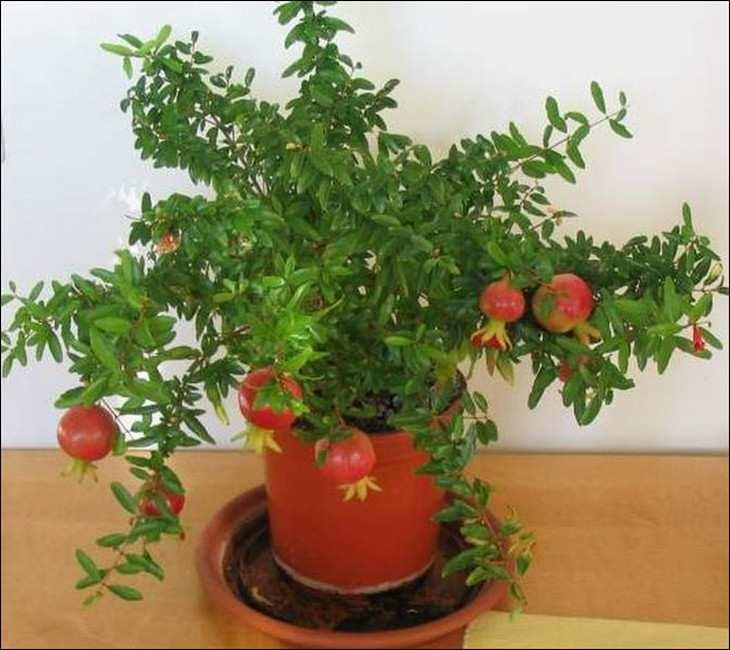 получение урожая в домашних условиях_poluchenie urozhaja v domashnih uslovijah