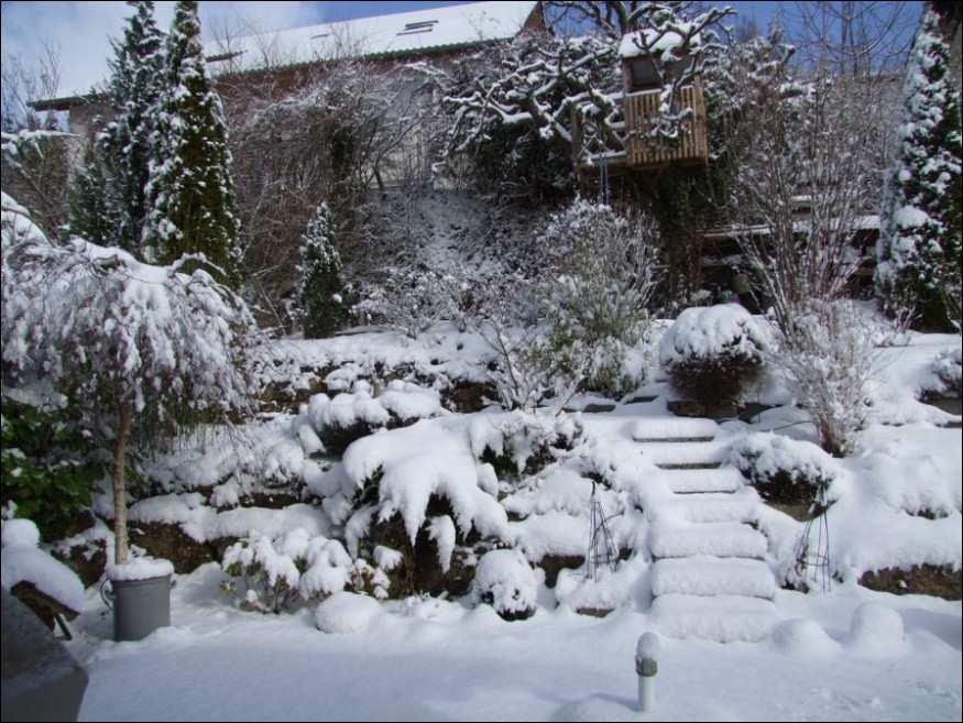 заснеженный сад
