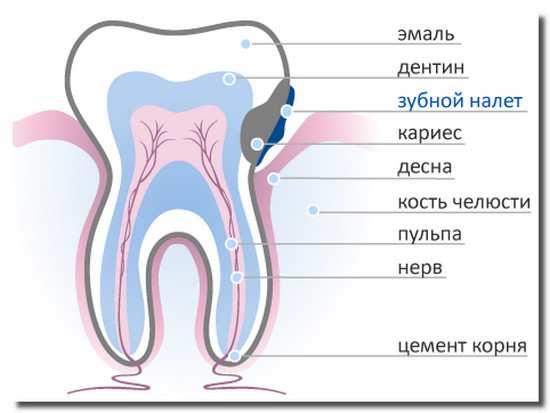 зуб_zub