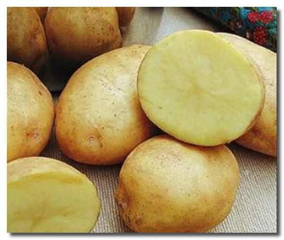 сырой_картофель_syroj_kartofel