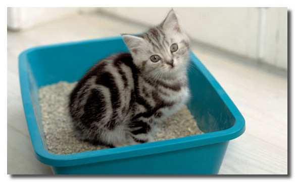 Кот не может попасть в лоток