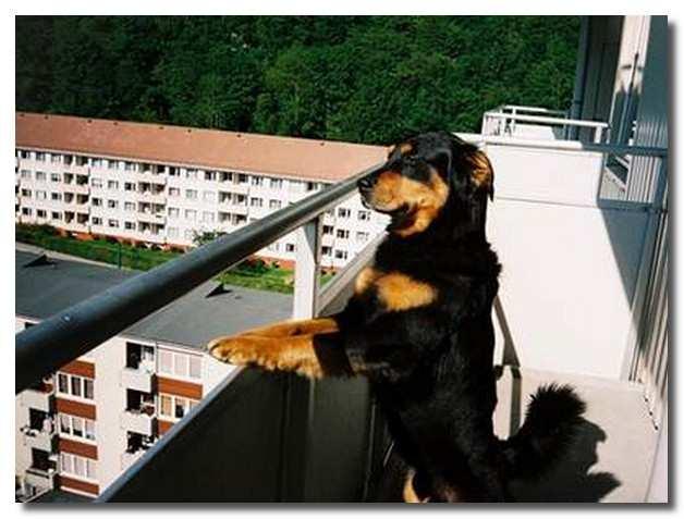 собака_в_квартире_sobaka_v_kvartire