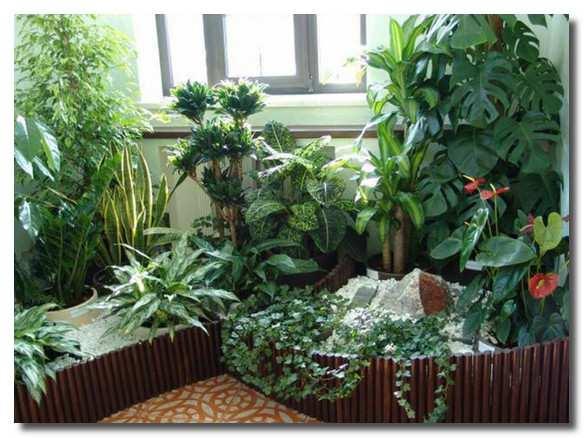 домашние-растения-domashnie-rastenija