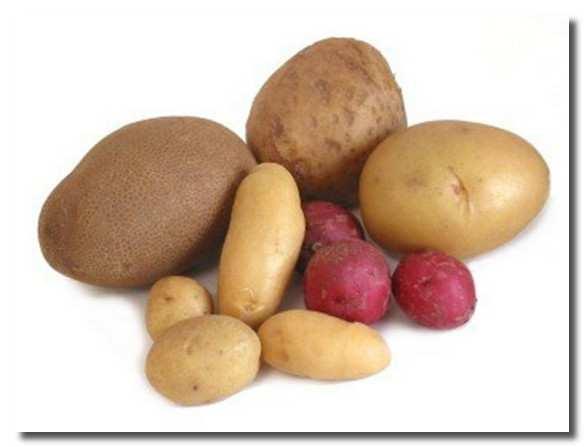 картофель-kartofel