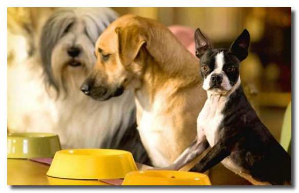 кормление-собаки-kormlenie-sobaki