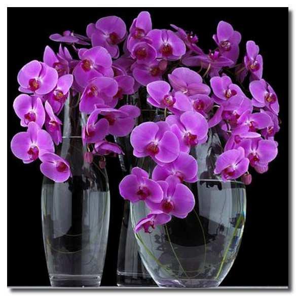 орхидея-фаленопсис-orhideja-falenopsis